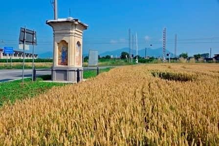 Piscina (To): pilone campestre tra strada e coltivi